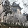 2021武汉大学樱花网上预约地址